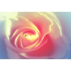 Розовая свадьба - самый романтичный юбилей