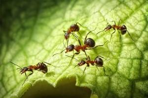 Цивилизация муравьёв
