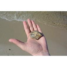Как достать жемчужину со дна морского?
