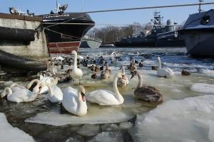 Сказки зимнего Балтийска