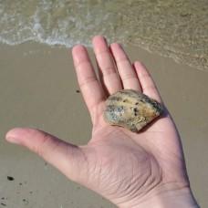 В поисках морской жемчужины